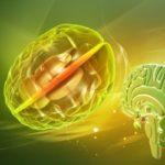 Вебинар Татьяны Супруненко «Оппортунистические инфекции: токсоплазмоз центральной нервной системы»